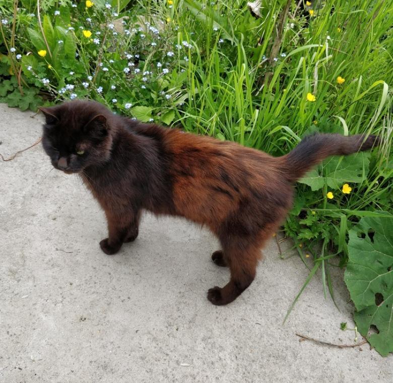 Renk değiştiren kara kedi