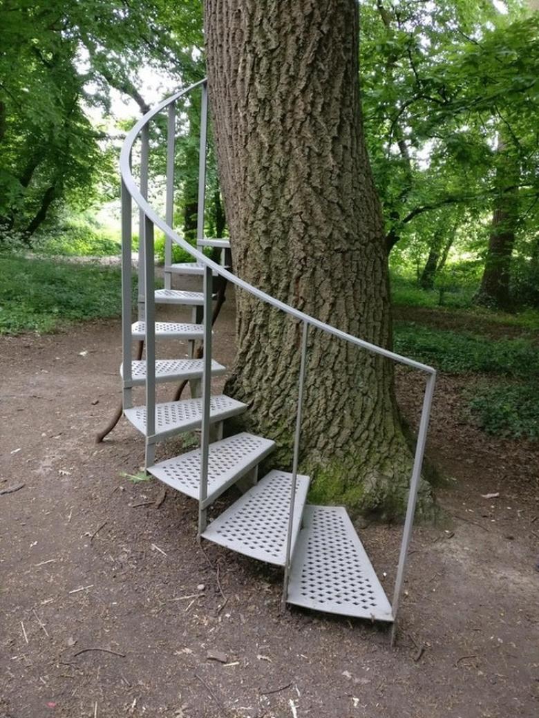 Sincaplar, kendilerine merdiven yapacak kadar çalışkan bir hale geldiler
