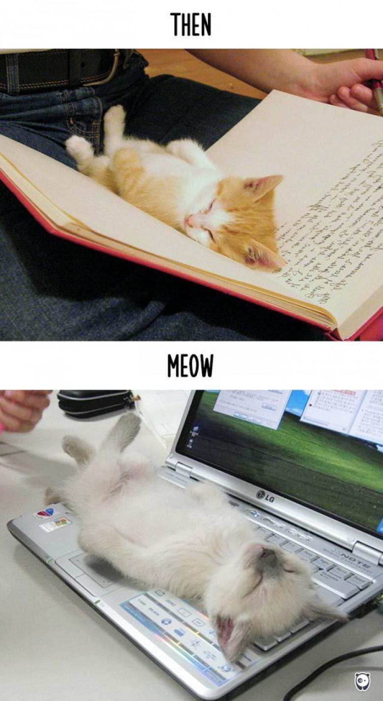 Önceden kitap arası şimdi ise sıcak laptop üstüne yatıyorlar...
