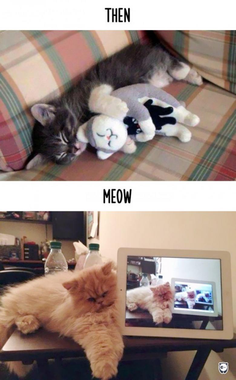 Teknoloji dostluğu