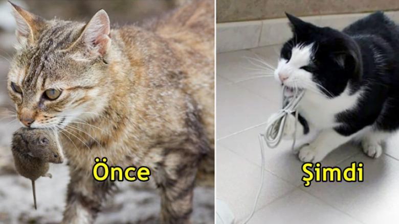 Teknolojinin Kedilerin Yaşamını Nasıl Etkilediğini Gösteren 12 Karşılaştırmalı Resim
